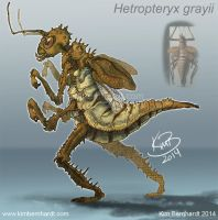 Anthro 'Hetropteryxx grayii' by phantos