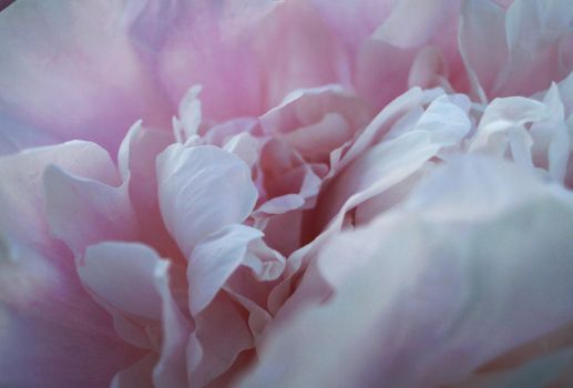 Pink Silk by Lina-Poe