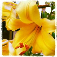 Flowers IV by Mirhahil