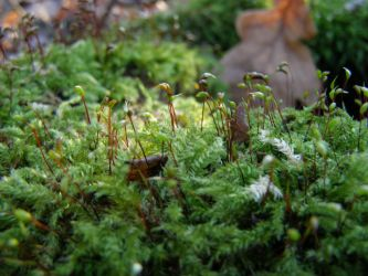 Microforest by OnGe