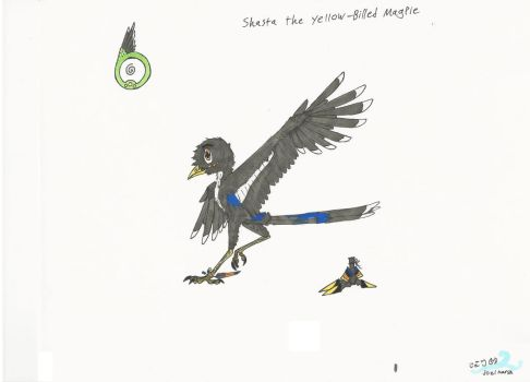 Character ref. Shasta the Yellow-Billed Magpie by Middlerun1
