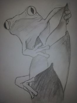 Red eye frog by nadinedavid