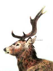 Red deer profile by BeckyKidus