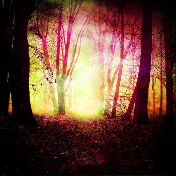 Pretty Woods by breapea