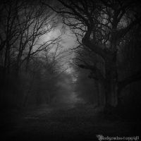 In the dark forest II by CountessBloody