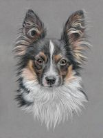 Dog portrait by Erikor