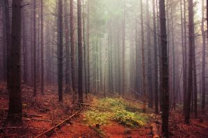 If These Trees Could Talk LXXXVII. by realityDream