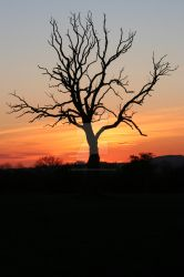 Sunset Tree by Naturesview