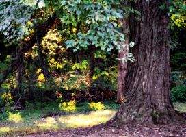 Sun-dappled woods by bewilderedconfused