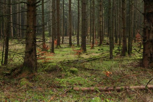 Forest Stock 042 by Malleni-Stock