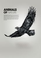 Animals of Nature - Eagle by karmagraphics