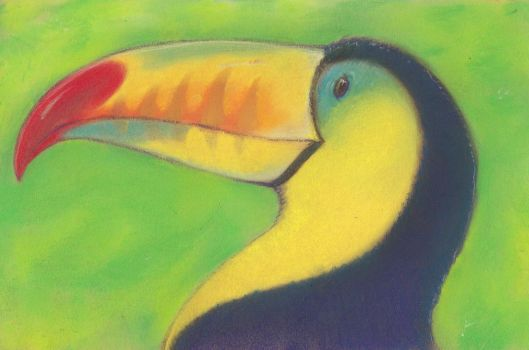 toucan by luve