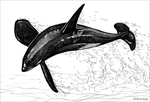Orca sketch by AniutqaART