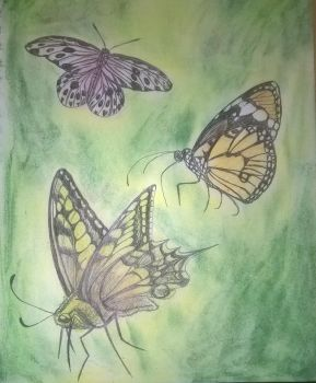 Three Butterflys by AmandaFerguson070707