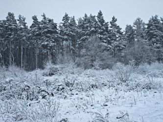 Winter 04 by Lexia84