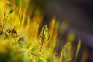 little moss by Samantha-meglioli