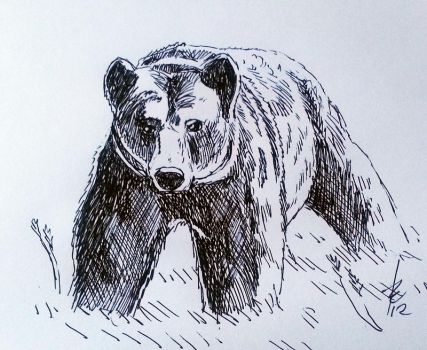 Bear by Brie91