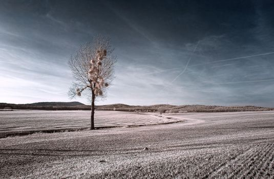 Fall in infrared by white-white
