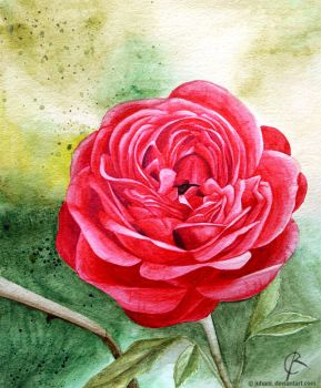 Red Rose by Juhani