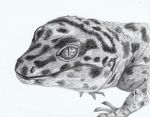 Gooseberry the gecko-pencil drawing by GooseberryGecko