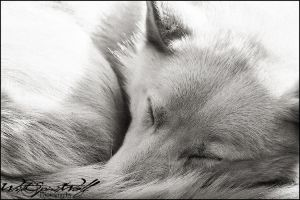 .:sleeping:. by WhiteSpiritWolf