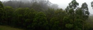 Forest Panorama by BreeSpawn