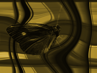 Butterfly in Gold Swirls by JasPics