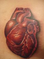 Deep Red Anatomical Heart by Renegade-Fabian