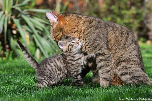 Mother's Day by ZoranPhoto