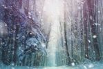 Snowfall in the forest ANIMATION by AStoKo