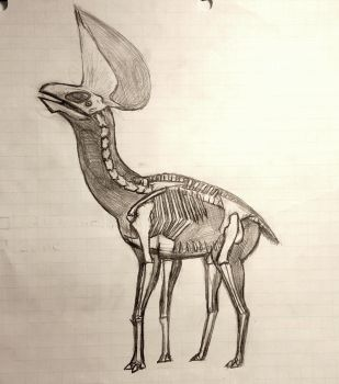 Browsing neoazhdarchid skeletal view by Thobewill