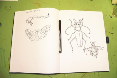 Sketchbook Insects by StephHolmes