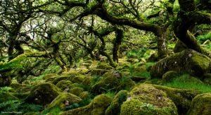 'neath those twisted boughs lies magic by LordLJCornellPhotos