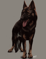 GSD by Angiegsnz