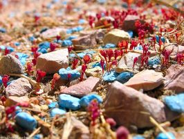 red sprouts and blue rocks by sataikasia