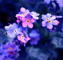 Happy Easter Forget me nots by ZoeWieZo