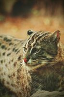 Fishing Cat by TheEmpatheticCat