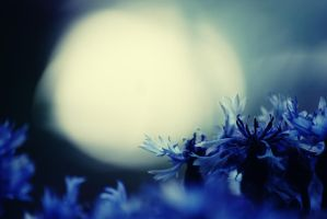 l'heure bleue by mickbis