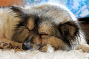 my sweet little sleeping puppy by fenchity