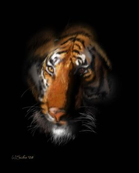 Tiger in the Dark by scifo