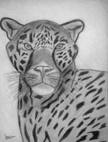Leopardo by natiwar02