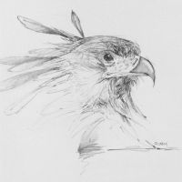 Secretary bird head study by Acousticletters