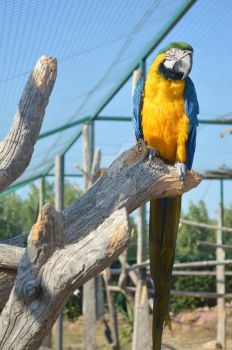 Yellow and blue Macaw by Sophiekeira98