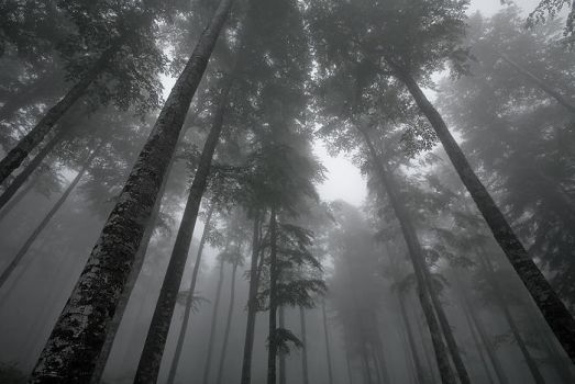Mystic forest by vincentfavre