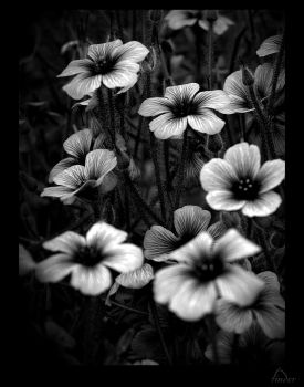 flowers 01 again by tinder