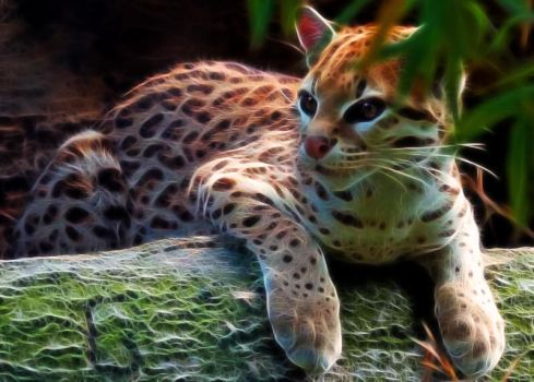 Young Ocelot by TXBadBoy