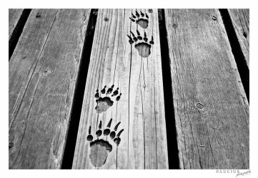 Wooden footprints by LuciusThePope