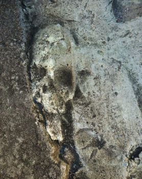 The Skull on the Cement by SilverLady7