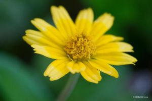 big details in small flower by Dancing-Treefrog