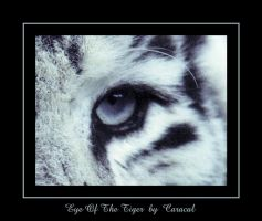 Eye Of The Tiger by caracal